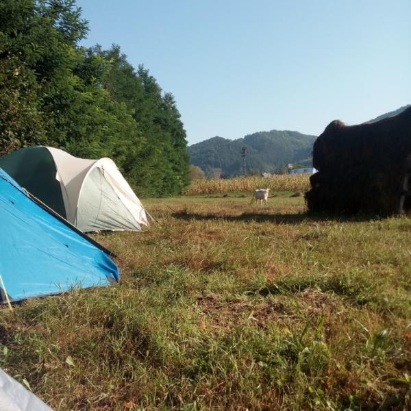 Localizări afective și decolonizarea ruralității românești la Telciu